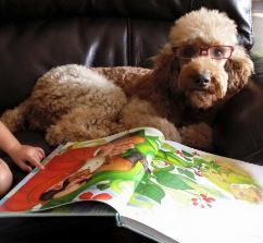 Are Goldendoodles a Good Family Dog - JoJos Goldendoodles